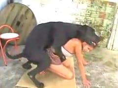 Vídeo de Zoofilia Amadora Com Jovem Muito Tarada Liberando a Sua Bucetinha Para o Seu Labrador Gigante – RJ